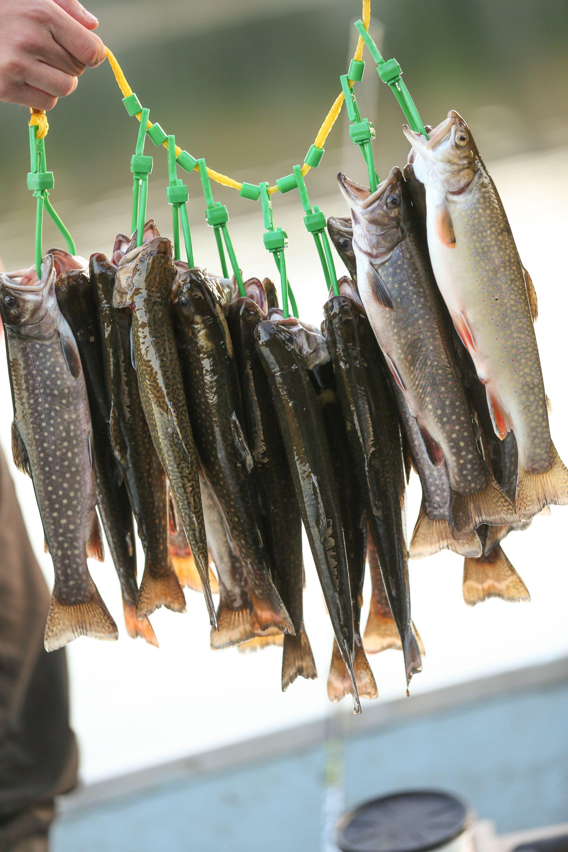 Municipalité de Ferme-Neuve - Pêches